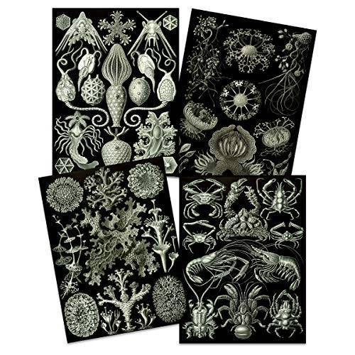 Artery8 Ernst Haeckel Kunstformen Der Natur Borden Natuur Vintage Biologie Art Print Poster Home Decor Premium Pack van 4