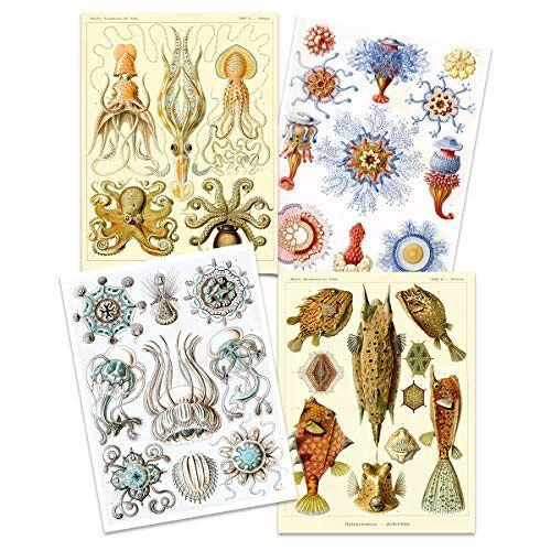 Artery8 Ernst Haeckel Kunstformen Der Natur Borden Natuur Vintage Octopus Biologie Art Print Poster Home Decor Premium Pack van 4