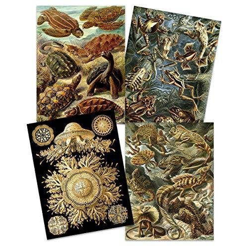 Artery8 Ernst Haeckel Kunstformen Der Natur Borden Natuur Vintage Schildpad Biologie Kunst Print Poster Home Decor Premium Pack van 4