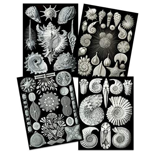 Artery8 Ernst Haeckel Kunstformen Der Natur Platen Natuur Vintage Biologie Art Print Poster Home Decor Premium Pack van 4