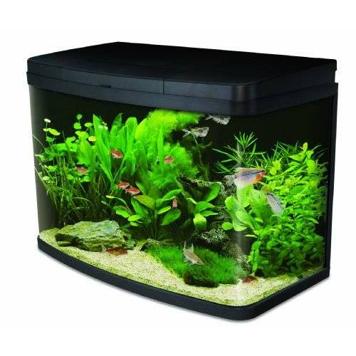 Interpet Inzicht Glas Aquariumvissen Tank Premium Kit, 64 L