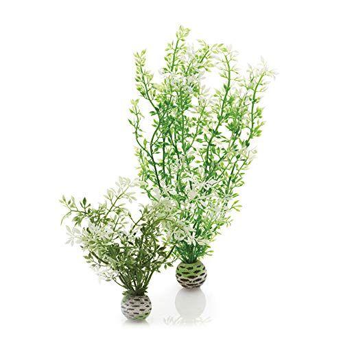biOrb Easy Plant Winter Bloemen, Medium