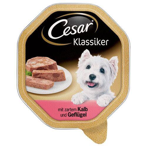 Cesar - Stoofpot van gevogelte, groenten en peterselie in saus