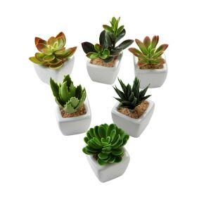 bonprix Kunstige planter, sukkulenter (5 deler)