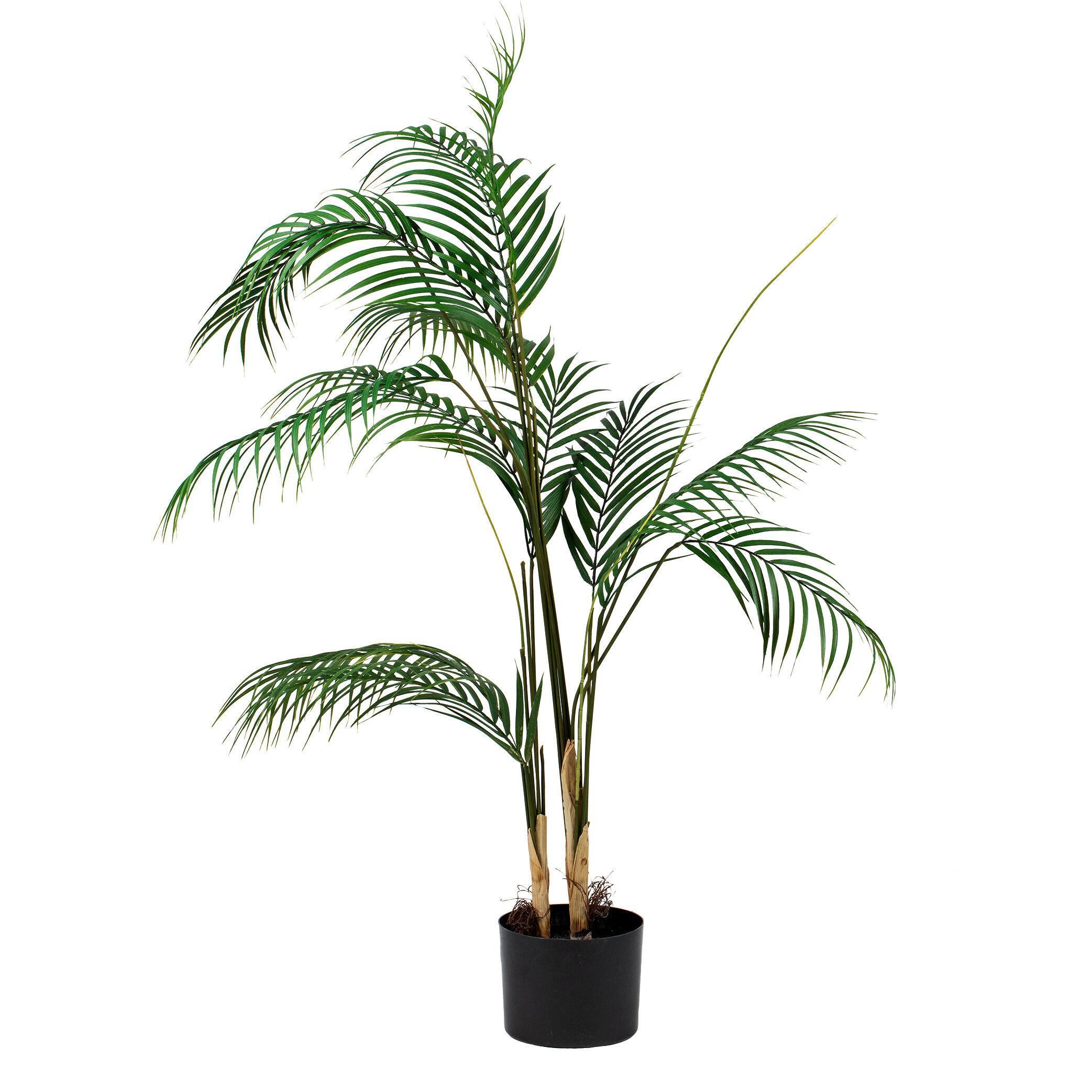 Standard produsent Plante Palme stor