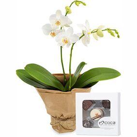 Orkidé og sjokolade