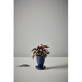 JADIE potte med skål - liten Mørk blå