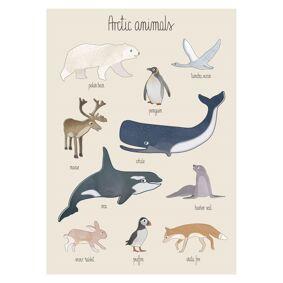 Sebra Plakat, Arctic animals