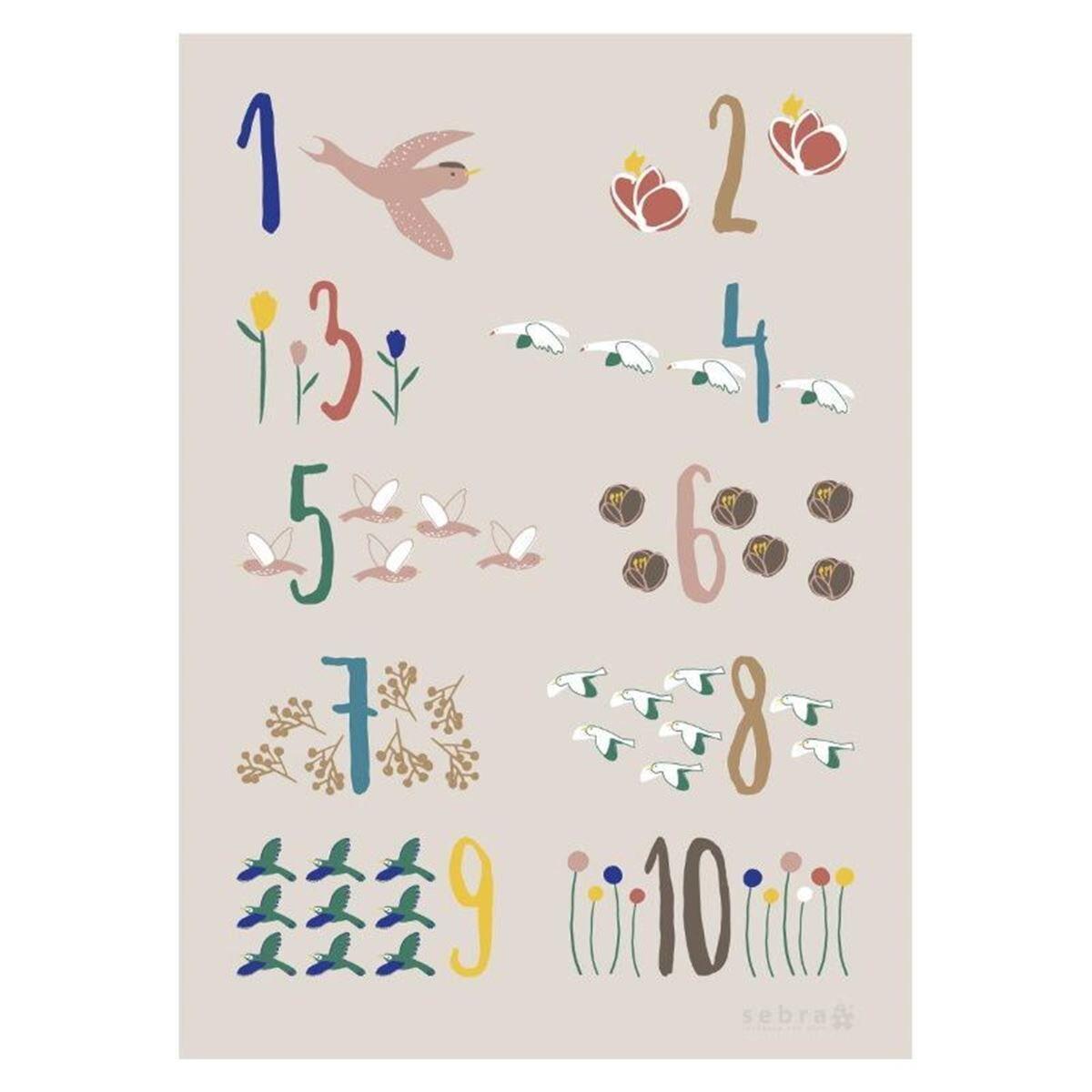 Sebra Plakat, Birds
