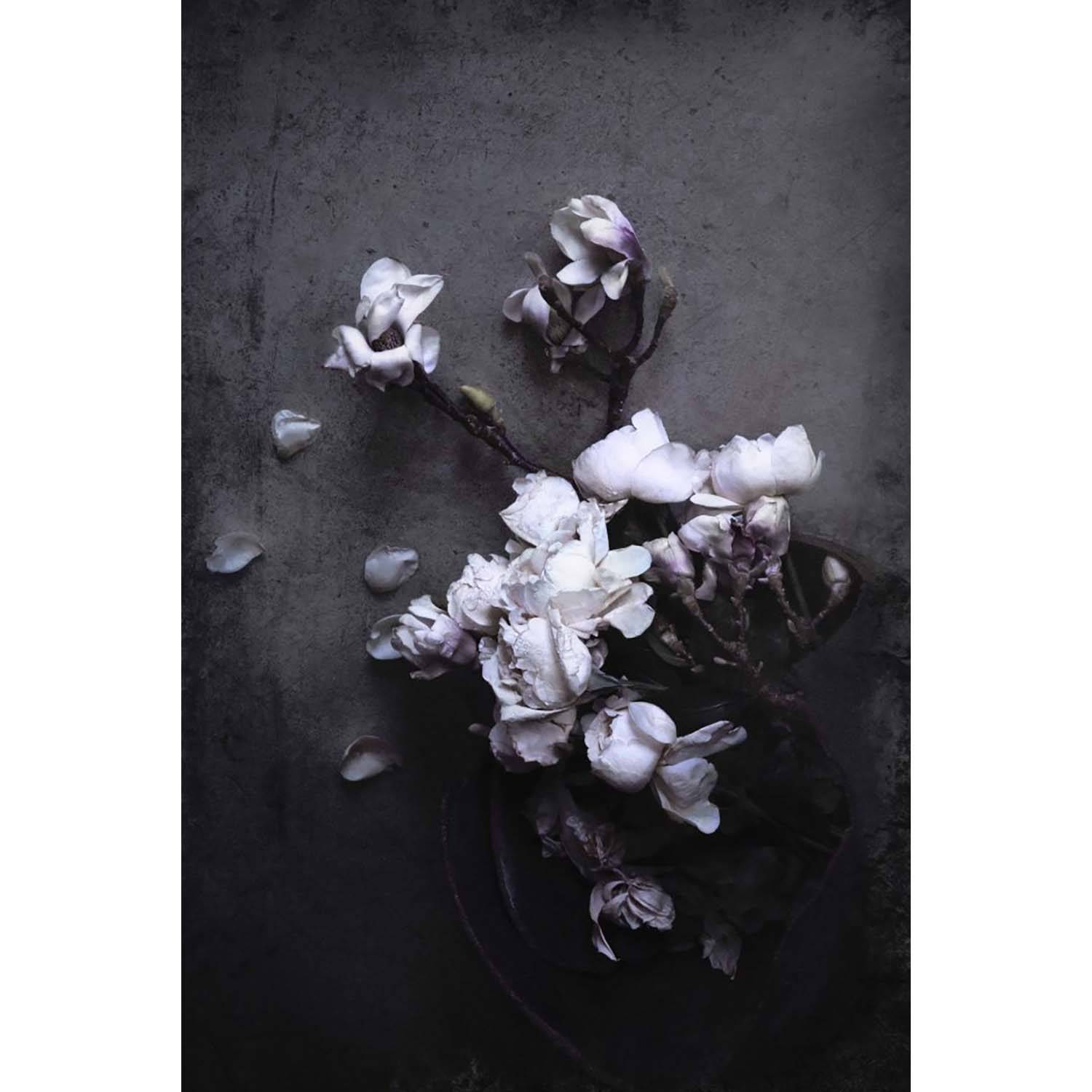 Love Warriors-Isolde - Magnolia And Roses Poster 30X40
