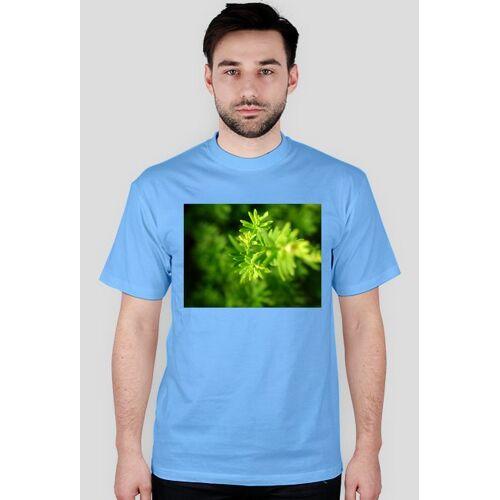 naturaUSA Roślinka