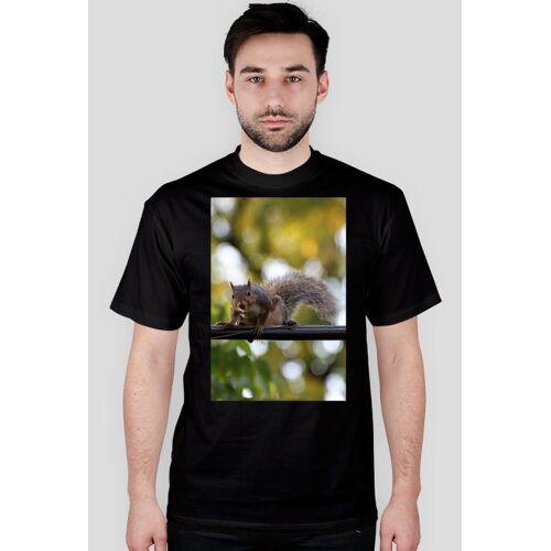 naturaUSA Amerykańska wiewiórka