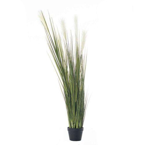 Dekoria Dekoracja roślinna Pampas Grass 145cm