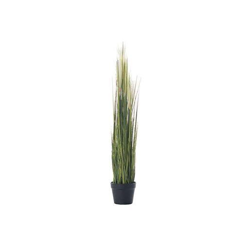 Dekoria Dekoracja roślinna Pampas Grass 100cm