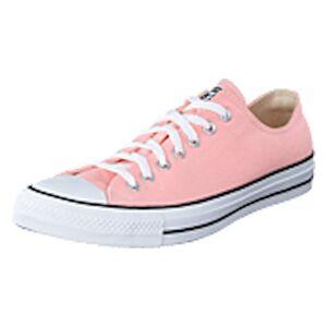 Converse Chuck Taylor All Star Ox Storm Pink, Shoes, rosa, EU 44