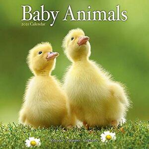 Baby Djur 2021 Väggkalender av Skapad av Avonside Publishing Ltd