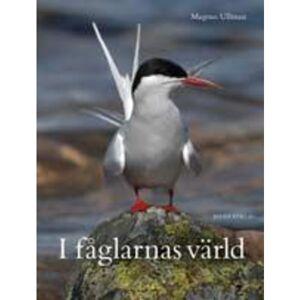 Bilda förlag I Fåglarnas Värld 9789157479563
