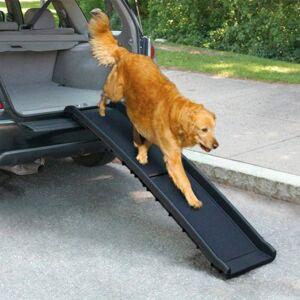 All For Paws Dog Bilramp (Plast)