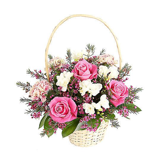 Serenata Flowers Raspberry Ripple