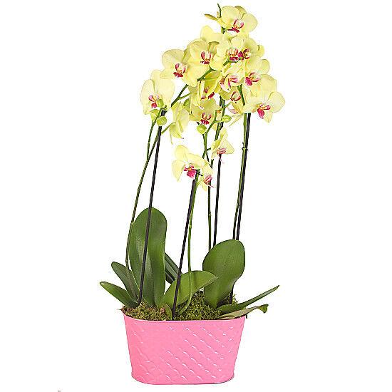 Serenata Flowers Yellow Orchid Planter