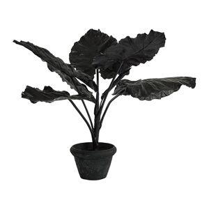 Pols Potten - Taro in Pot - Black