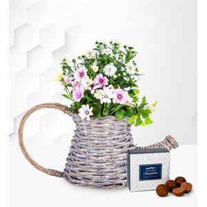 Spring Delight Basket - Outdoor Plants - Garden Plants - Outside Plants - Outdoor Plant Delivery - Plant Gifts