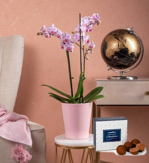 Phalaenopsis Orchids – Orchid Plants - Indoor Plants - Houseplants - Plant Gifts - Plant Gift Delivery
