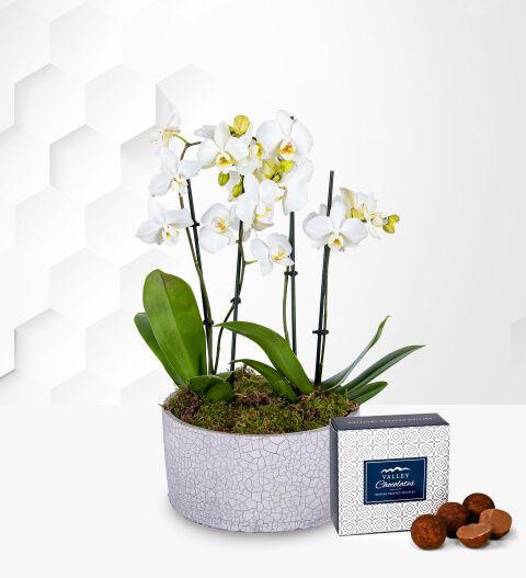 Luxury Orchid Pot - Free Chocs