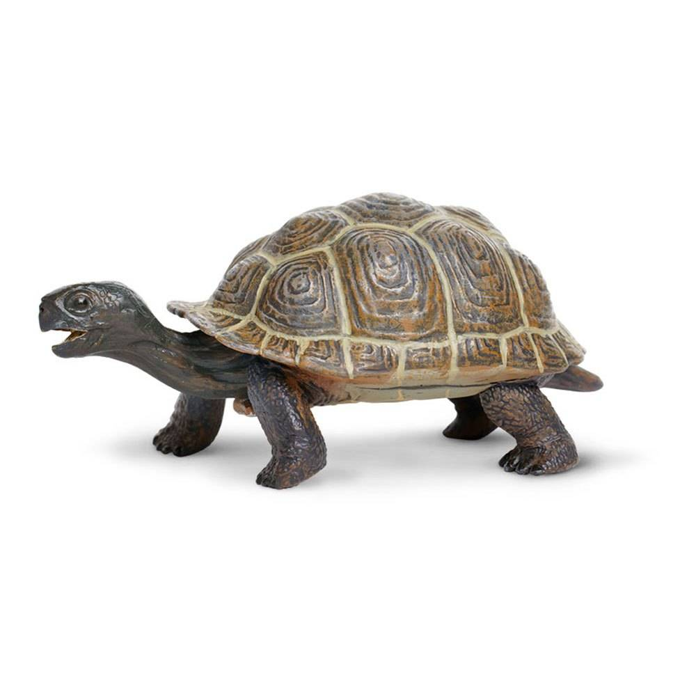 Safari Ltd Tortoise Baby From 3 Years Brown  - Unisex - Size: From 3 Years