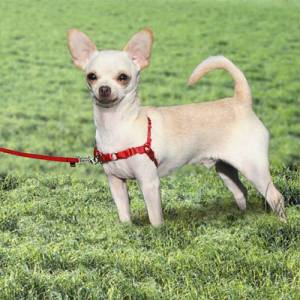 PetSafe Easy Walk®  Harness - Small Red