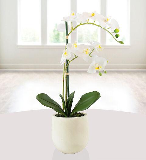 Prestige Hampers Elegant Silk Potted Orchid Hamper - Gift Basket - Prestige Hampers
