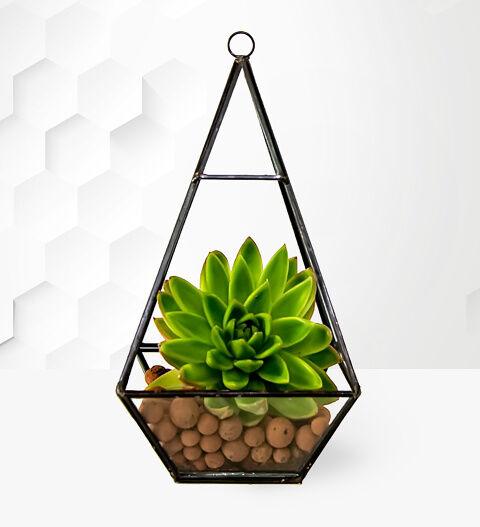 Prestige Hampers Succulent Terrarium - Succulents - Succulent Plants - Birthday Gifts - Birthday Gift Delivery