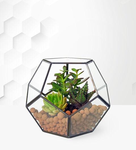Prestige Hampers Succulent Terrarium - Plant Delivery - House Plants - Indoor Plants - Indoor Terrarium - Plant Gifts