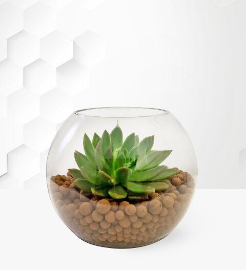 Prestige Hampers Terrarium Bowl - Succulents - Succulent Plants - Birthday Gifts - Birthday Gift Delivery