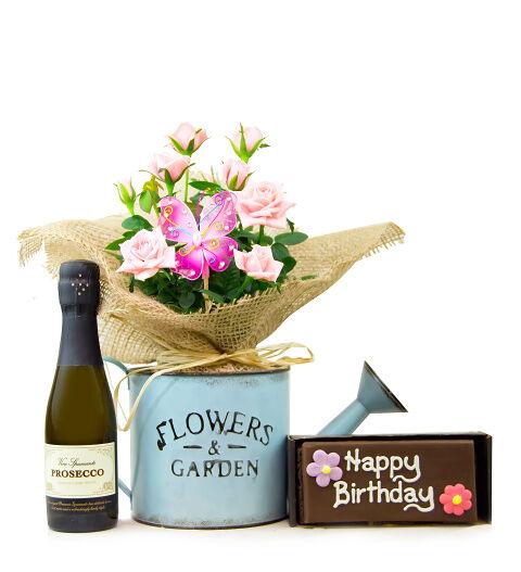 Prestige Hampers Brilliant Birthday - Pink Rose Plant - Rose Plants - Birthday Gifts - Birthday Gift Delivery