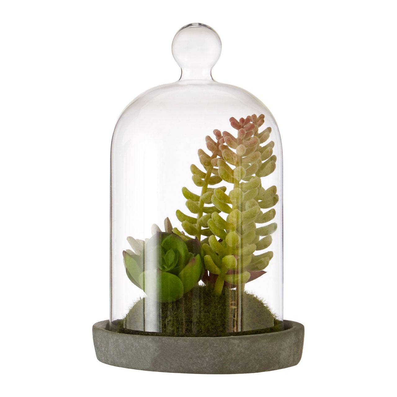 HoF Living Faux Succulent Plant In Glass Dome