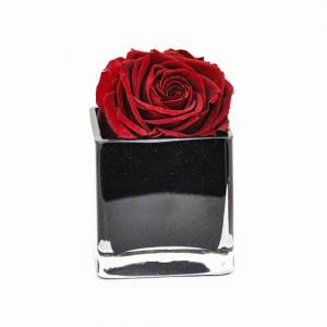 Hello Of Mayfair Single Red Rose in a Vase