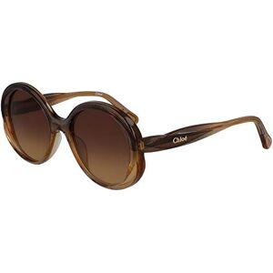 Chloe CE3615S, Acetate Sunglasses Glitter Brown Gold Unisex Adult, Multicolor, Standard