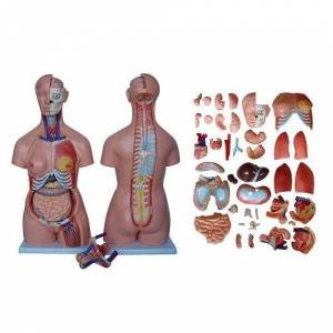 66fit XC-208 TORSO WITH - 40 PARTS - 85CM TALL