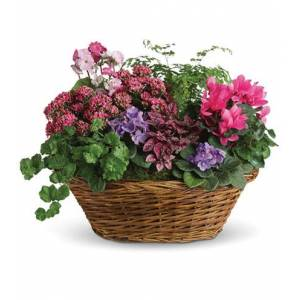 Blooms Today Simply Chic Mixed Plant Basket Flower Delivery