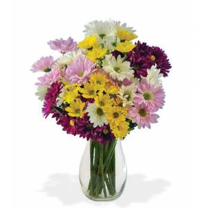 Blooms Today Daisy Smiles Bouquet Flower Delivery