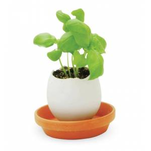 NOTED LLC Crack and Grow Ceramic Egglings