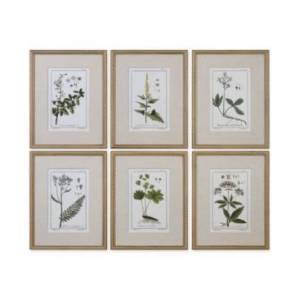 Uttermost Green Floral Botanical Study Wall Art, Set of 6  - Multi