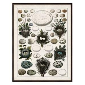 "Melissa Van Hise Aerie I Framed Giclee Wall Art - 36"" x 47"" x 2""  - Multi"