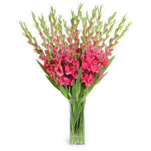 FranceSon Fuchsia Gladiolus Arrangement