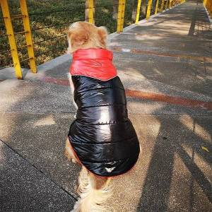 DHgate dog apparel big clothes winter large clothing waterproof coat jacket samoyed husky labrador golden retriever pet outfit vest
