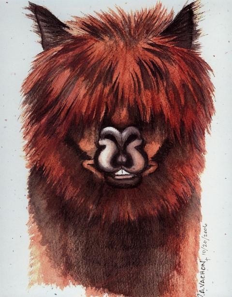 Dee VachonMiller Abraham Alpaca Print