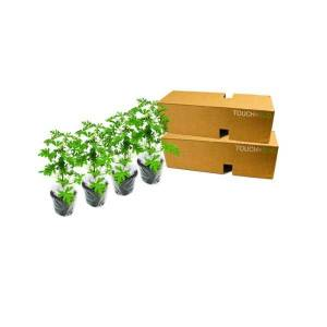 Generic Citronella Anti-Mosquito Plants - 2, 4, or 8 Pack with Shovel