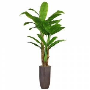 """Laura Ashley 86.25"""" Tall Banana Tree Artificial Faux Decorative in Resin Planter"""