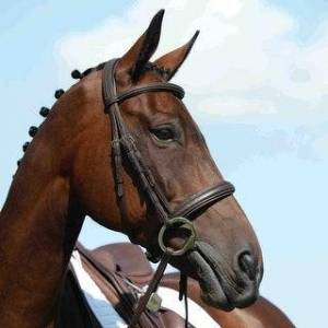Overstock Collegiate Syntovia+ Padded Raised Cavesson Bridle (Brown - Cob)